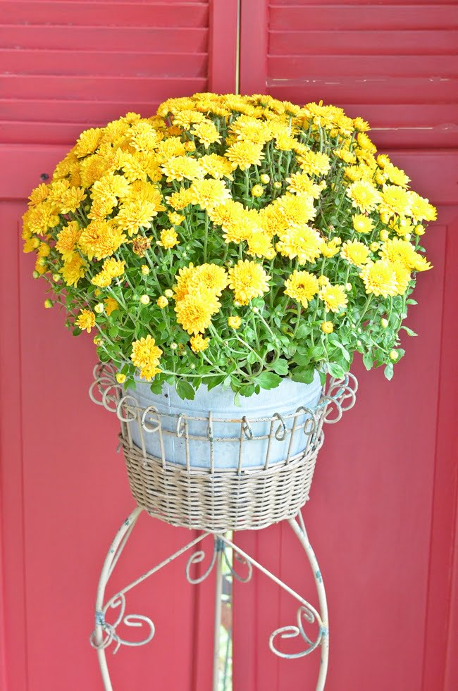 yellow mum on a fall porch