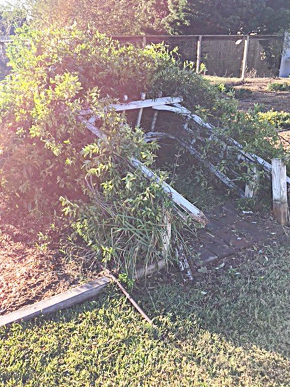 blown over arbor after Hurricane Matthew