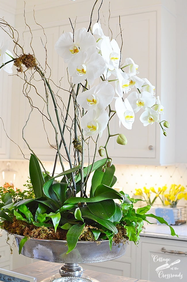orchid arrangement in the kitchen of the Designer Showhouse | Cottage at the Crossroads