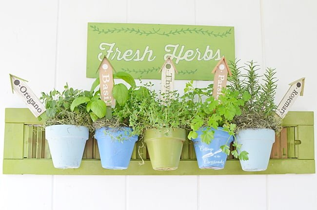 common culinary herbs hanging on a repurposed shutter | Cottage at the Crossroads