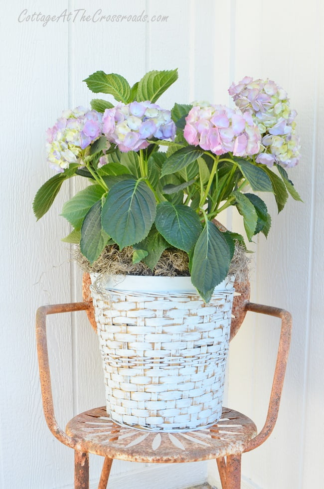 hydrangeas in a painted wicker plant basket | Cottage at the Crossroads