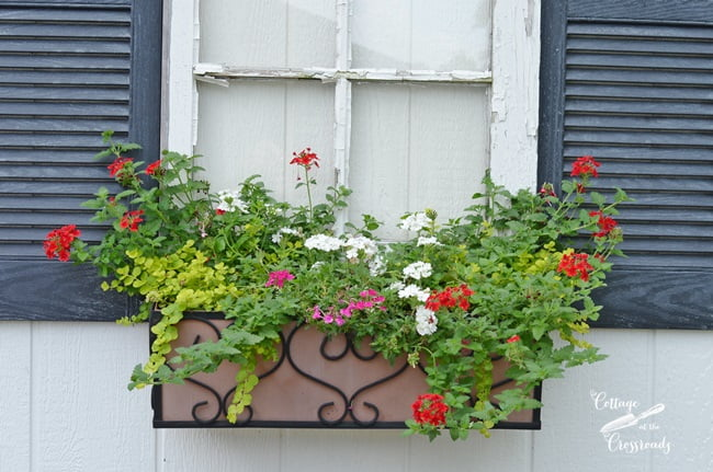 flower box planted with pretty annuals | Cottage at the Crossroads