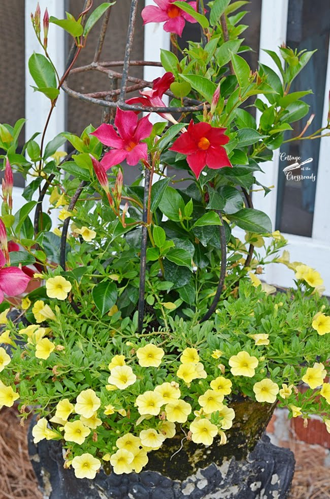 red mandevilla and yellow callibrochoa | Cottage at the Crossroads