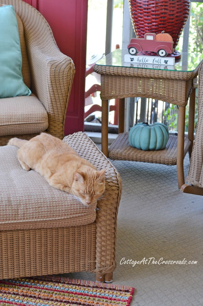 Henry, our cat, on our fall front porch