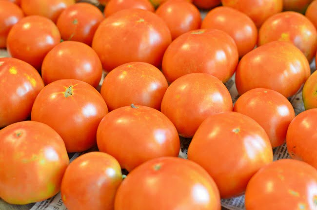 Celebrity tomatoes are at the top of our list of best tomato plants