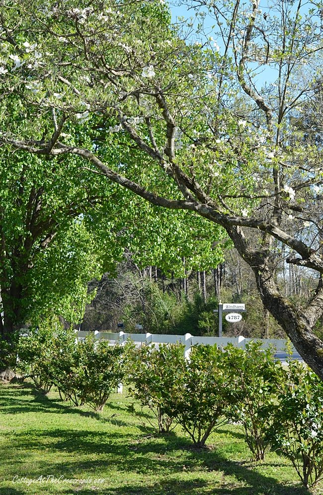 spring tour with blooming dogwoods