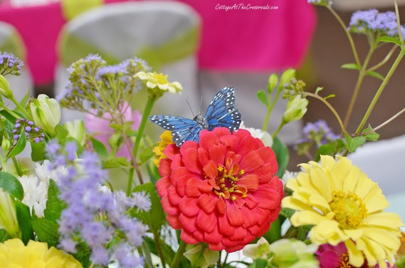 butterfly on a red zinnia in a centerpiece