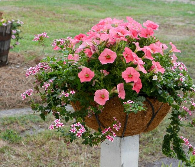 flowers in baskets mounted on wooden posts