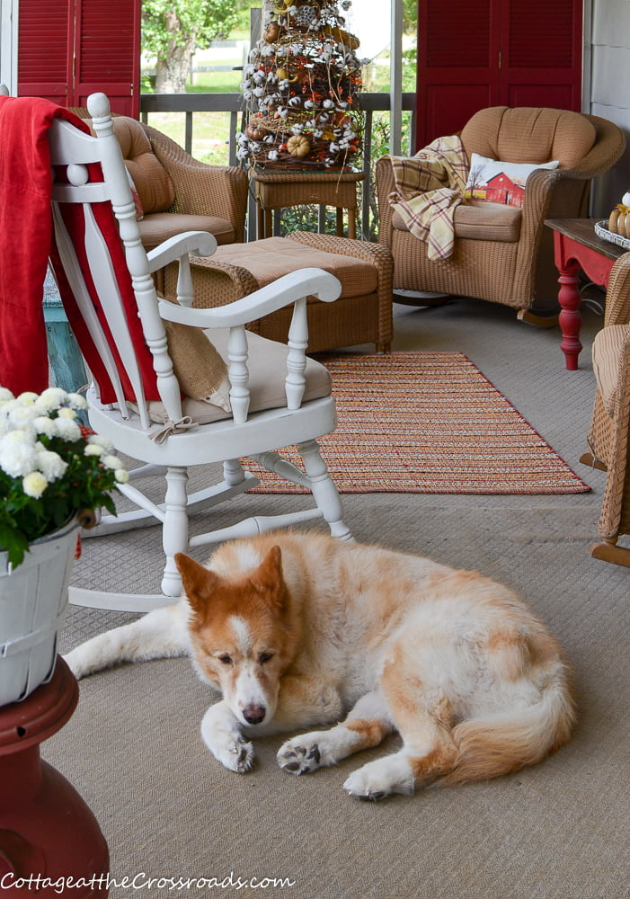Lucy our dog on our fall front porch
