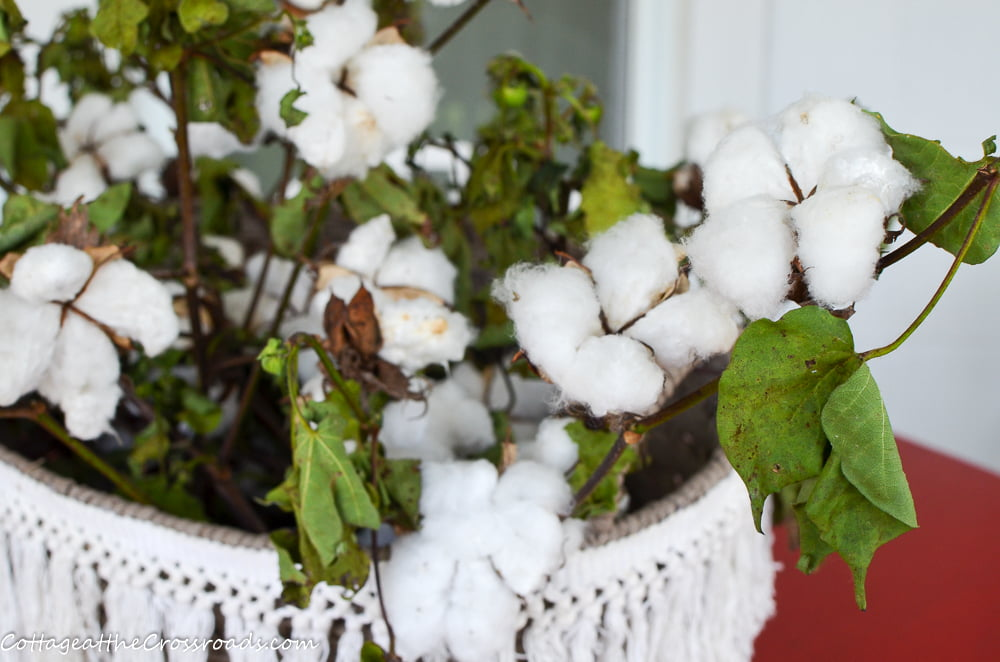 stalks of real cotton in a basket