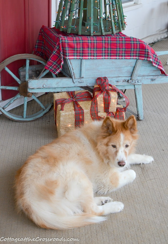 Lucy, our dog, on the Christmas front porch