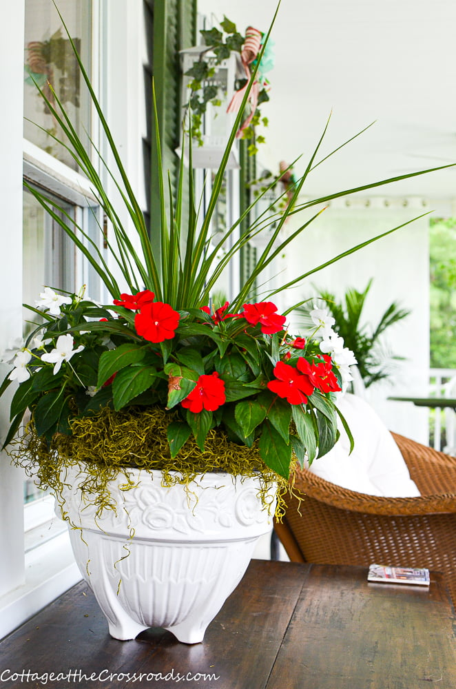 red and white flowers and plant on the screen porch