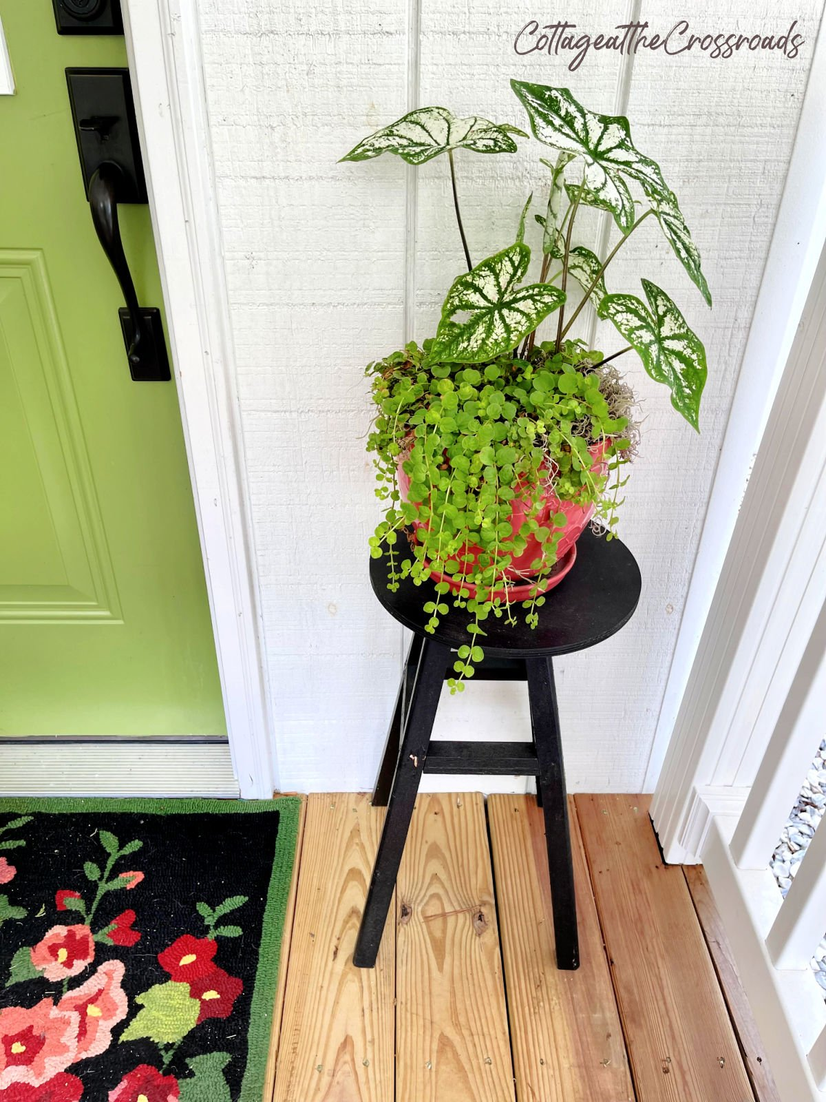 white caladiums and creeping jenny in a planter on a stool