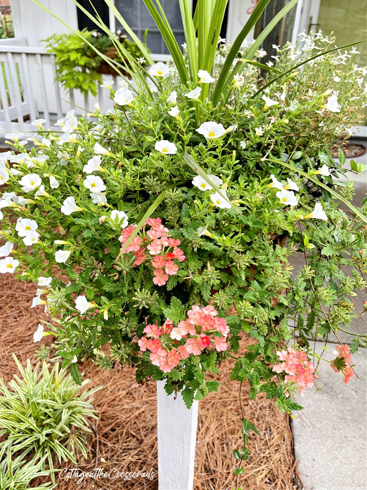 coral verbena and white million bells planted in a basket on a wooden post