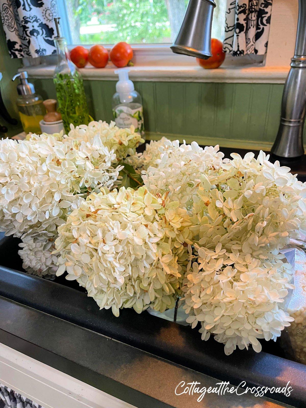 white hydrangea blooms in the sink